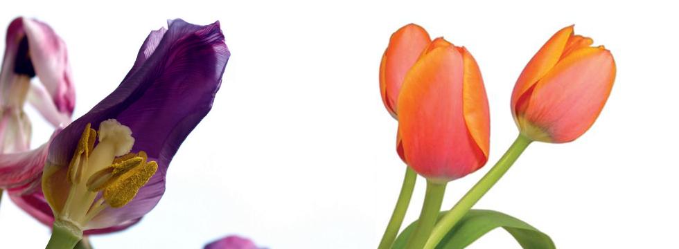 LEADS2opportunities | verlepte leads tot bloei brengen